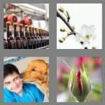 4-pics-1-word-3-letters-bud-cheats-4189352