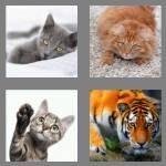4-pics-1-word-3-letters-cat-cheats-9516035