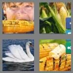 4-pics-1-word-3-letters-cob-cheats-4359854