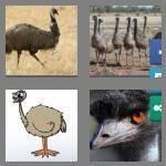 4-pics-1-word-3-letters-emu-cheats-3612533