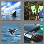 4-pics-1-word-3-letters-fin-cheats-5782296