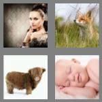 4-pics-1-word-3-letters-fur-cheats-5299571