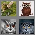 4-pics-1-word-3-letters-owl-cheats-9218098
