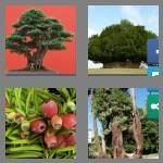 4-pics-1-word-3-letters-yew-cheats-6746594