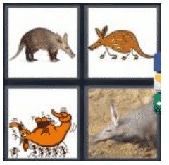 answer-aardvark-2