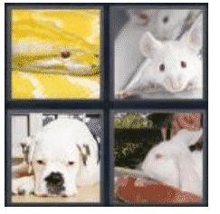 answer-albino-2