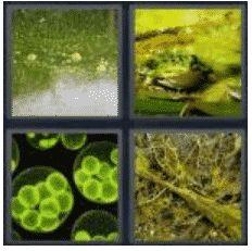 answer-algae-2