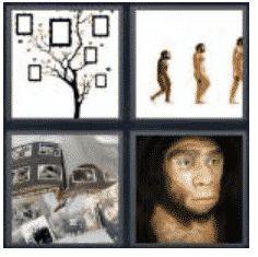 answer-ancestor-2
