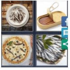 answer-anchovies-2