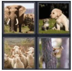 answer-animal-2