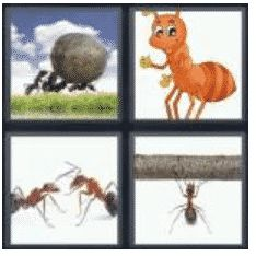 answer-ant-2