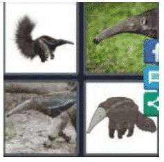 answer-anteater-2