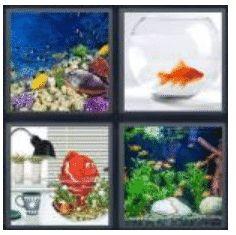 answer-aquarium-2