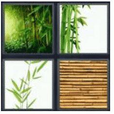 answer-bamboo-2