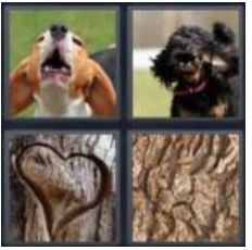 answer-bark-2