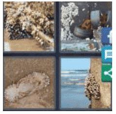 answer-barnacle-2