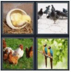 answer-bird-2