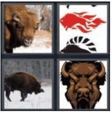 answer-bison-2
