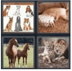 answer-breed-2