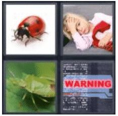 answer-bug-2