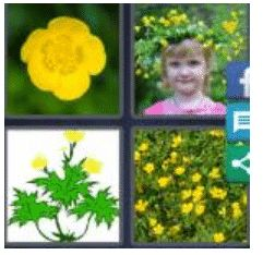 answer-buttercup-2
