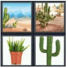 answer-cactus-2