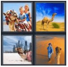 answer-camel-2