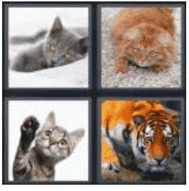 answer-cat-2