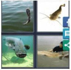 answer-catfish-2
