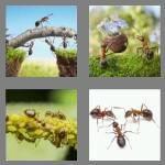 cheats-4-pics-1-word-4-letters-ants-2129242