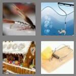 cheats-4-pics-1-word-4-letters-bait-3062716