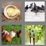 cheats-4-pics-1-word-4-letters-bird-2492944