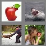 cheats-4-pics-1-word-4-letters-bite-4997610