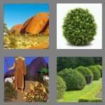 cheats-4-pics-1-word-4-letters-bush-1719643