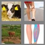 cheats-4-pics-1-word-4-letters-calf-8992844