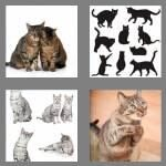 cheats-4-pics-1-word-4-letters-cats-9836488