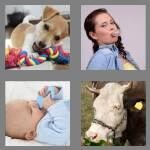 cheats-4-pics-1-word-4-letters-chew-5717090