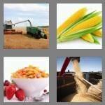 cheats-4-pics-1-word-4-letters-corn-8853377