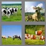 cheats-4-pics-1-word-4-letters-cows-2951566