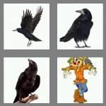 cheats-4-pics-1-word-4-letters-crow-6477297