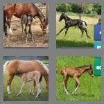 cheats-4-pics-1-word-4-letters-foal-7921999