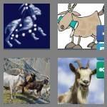 cheats-4-pics-1-word-4-letters-goat-8827265