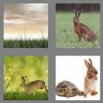 cheats-4-pics-1-word-4-letters-hare-1785586