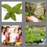 cheats-4-pics-1-word-4-letters-herb-8773478