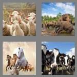 cheats-4-pics-1-word-4-letters-herd-4501549