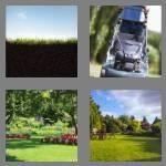 cheats-4-pics-1-word-4-letters-lawn-5342059
