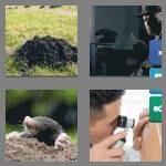 cheats-4-pics-1-word-4-letters-mole-8473977