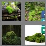 cheats-4-pics-1-word-4-letters-moss-8684195