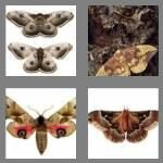 cheats-4-pics-1-word-4-letters-moth-5197745