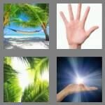 cheats-4-pics-1-word-4-letters-palm-3203337